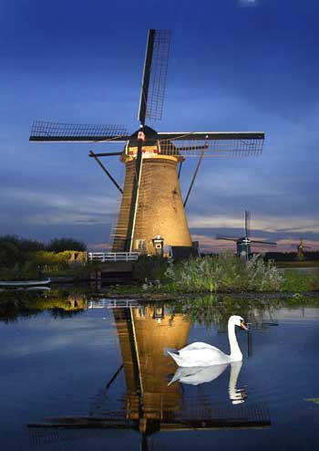A swan swims in front of a lit-up windmill at dusk in Kinderdijk, the Netherlands.